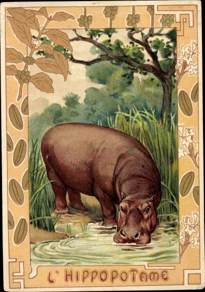 Passepartout Ak Hippopotame, Nilpferd