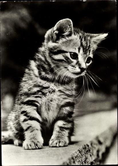 Ak Katzenbaby, Portrait