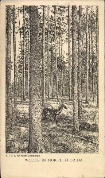Künstler Ak North Florida USA, Woods, Waldpartie
