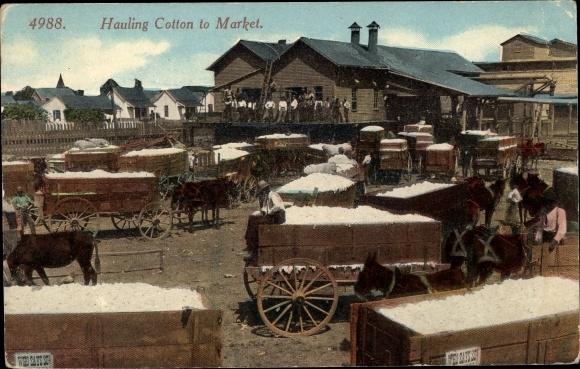 Ak USA, Hauling Cotton to Market
