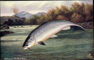 Künstler Ak Salmon, The First Leap, Lachs am Angelhaken