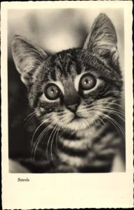 Ak Kleine getigerte Katze, Peterle