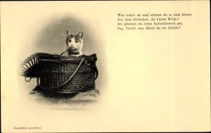 Ak Hauskatze in einem Korb, Was sinnst du und schaust du so keck heraus