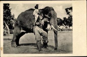 Ak Zähmung eines Elefanten, Ostindien