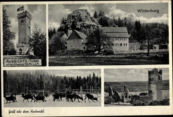 Ak Kempfeld Birkenfeld Pfalz, Aussichtsturm, Wildenburg, Hirsche
