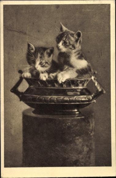 Ak Zwei Hauskatzen in einer Schale, Kätzchen