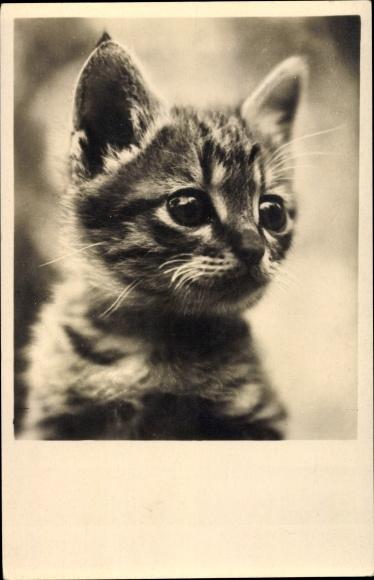 Ak Hauskatze, Junges Kätzchen, Portrait