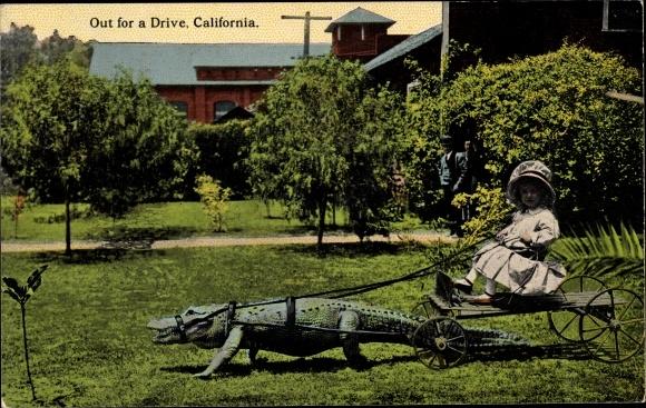 Ak Kalifornien USA, Out for a Drive, Krokodil als Zugtier, Mädchen