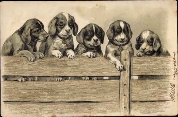 Litho Fünf Hundewelpen an einem Holzzaun