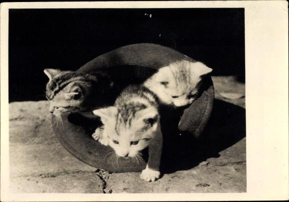Ak Drei Kätzchen, Hauskatzen in einem Hut