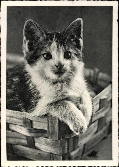 Ak Kätzchen in einem Korb, Hauskatze