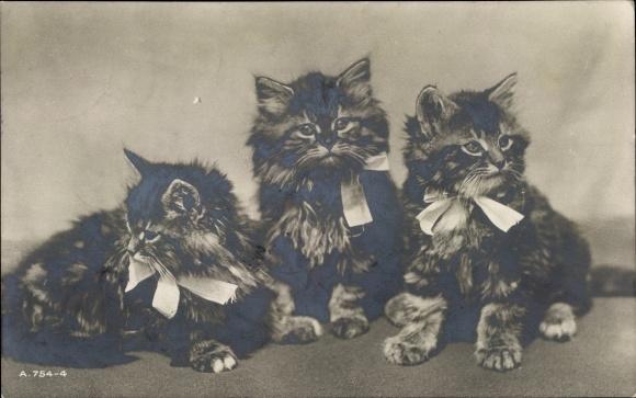 Ak Drei kleine Katzen, Katzenbabys