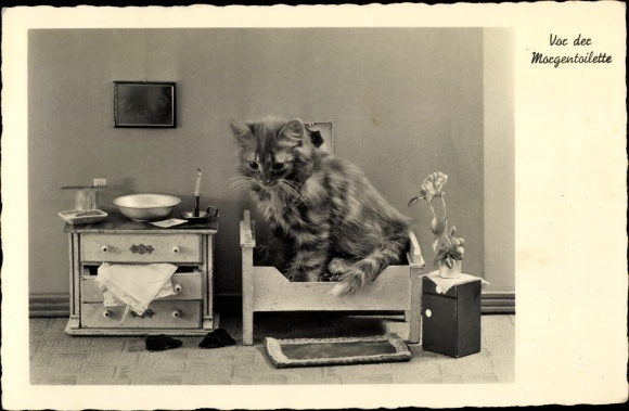 Ak Vor der Morgentoilette, Katze, NPG 4613