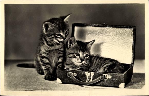 Ak Zwei Katzenbabys, Koffer