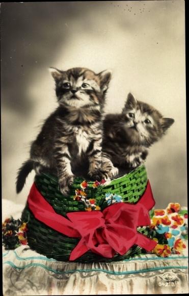 Ak Zwei Katzenbabys, Korb, Blumen, Amag