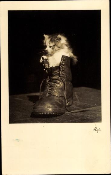 Ak Kleine Katze in einem Schuh, Katzenbaby