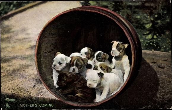 Ak Mother's Coming, Hundewelpen in einem Fass, Photochromie, Tuck 4719