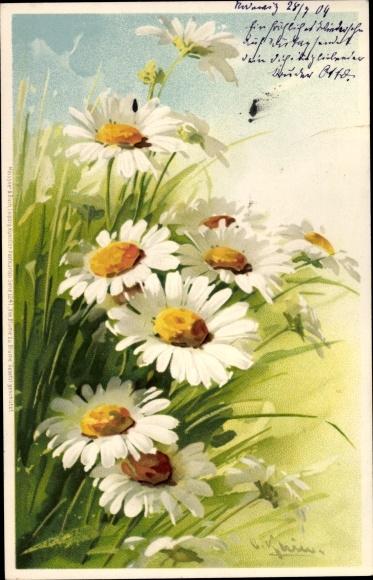 Künstler Litho Klein, Catharina, Weiße Blumen, Wiese, Meissner Buch