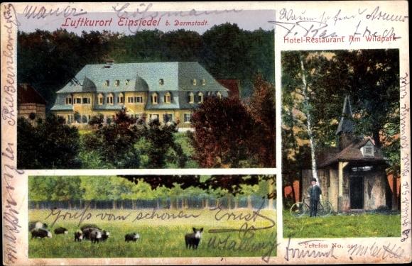 Ak Darmstadt in Hessen, Einsiedel, Hotel Restaurant Am Wildpark, Wildschweine