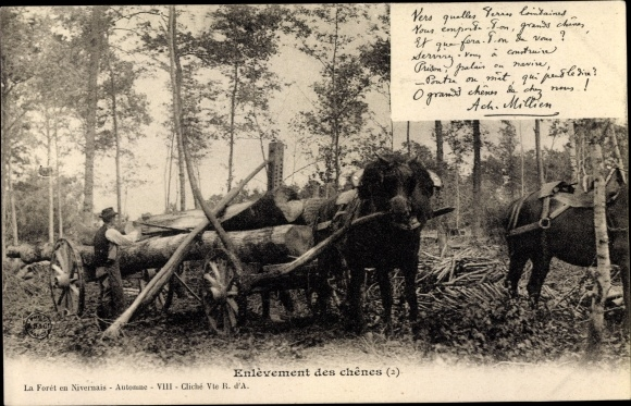 Ak Enlèvement des chênes, Holztransport