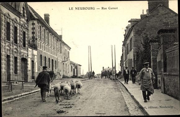 Ak Le Neubourg Eure, Rue Carnot, Schafe