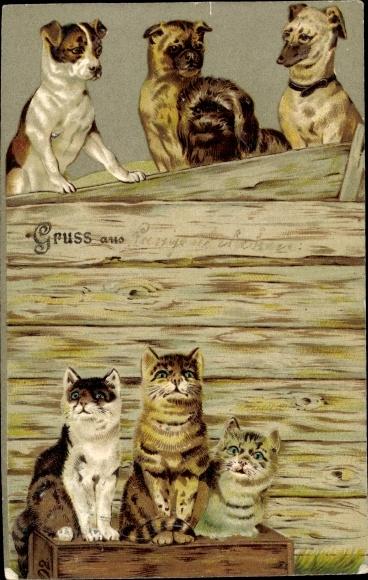Präge Ak Katzenjunge und Hundewelpen