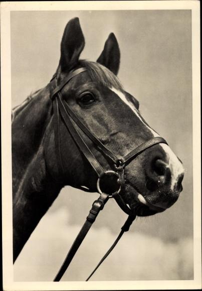 Ak Pferd, Kopfstudie, Portrait