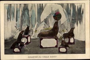 Künstler Ak Souvenir du Cirque Rancy, Robben