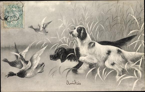 Künstler Ak Jagdhunde scheuchen Enten auf