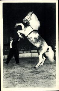 Ak Dressurpferd, Zirkuspferd