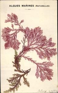 Material Ak Algues Marines naturelles, Naturalgen