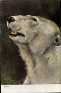 Künstler Ak Eisbär, Tierportrait