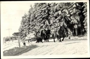 Ak Neustadt am Rennsteig Großbreitenbach im Ilm Kreis Thüringen, Pferde ziehen gefällte Bäume