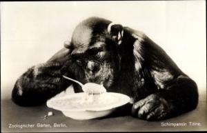 Ak Berlin, Zoologischer Garten, Schimpansin Titine