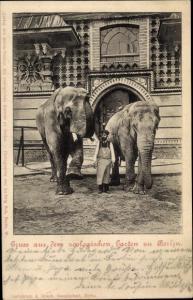 Ak Berlin Charlottenburg, Zoologischer Garten, Elefanten mit Tierpfleger