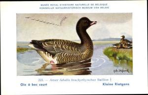 Künstler Ak Dupond, Hub., Oie à bec court, Kleine Rietgans, Anser fabalis brachyrhynchus