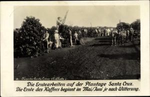 Ak Santa Cruz do Sul Brasilien, Erntearbeiten auf der Plantage, Kaffee Ernte
