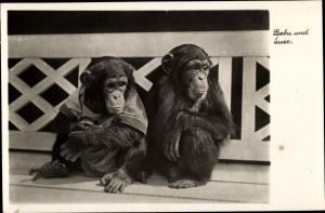 Ak Halle an der Saale, Zoologischer Garten, Babu und Suse, Schimpansenkinder