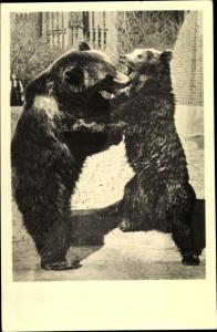 Ak Zoologischer Garten Berlin, Bären