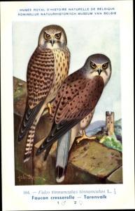 Künstler Ak Dupond, Hub., Falco tinnunculus, Turmfalke