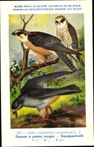 Künstler Ak Dupond, Hub., Falco vespertinus, Rotfußfalke