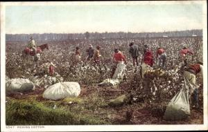 Ak Südstaaten USA, Picking Cotton, Baumwollpflücker