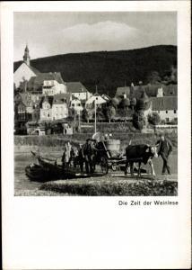 Ak Zeit der Weinlese, Ortschaft, Rinderfurwerk, Weinbottich