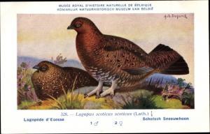 Künstler Ak Dupond, Hub., Lagopus scoticus, Schottisches Moorschneehuhn