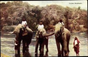 Ak Sri Lanka Ceylon, Elephants, Männer auf Elefanten