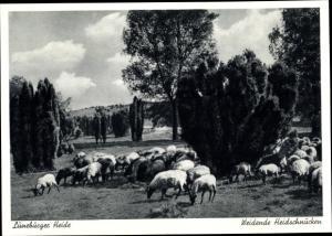 Ak Weidende Heidschnucken in der Lüneburger Heide