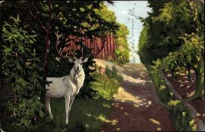 Künstler Ak Weißer Hirsch auf dem Weg nach der Heidemühle