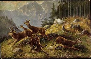Künstler Ak Müller, M., Erschreckt wegspringende Hirsche und Hirschkühe