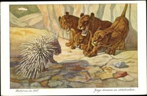 Künstler Ak Von der Poll, Herbert, Junge Löwen und Stachelschwein