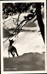 Ak Reh und Eichhörnchen im Wald, Schnee